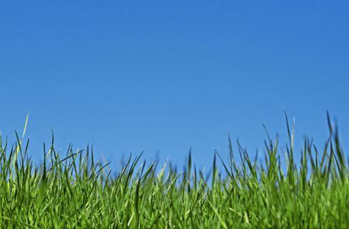 Sie werden gerufen, bevor der Rasen ins Gras beißt