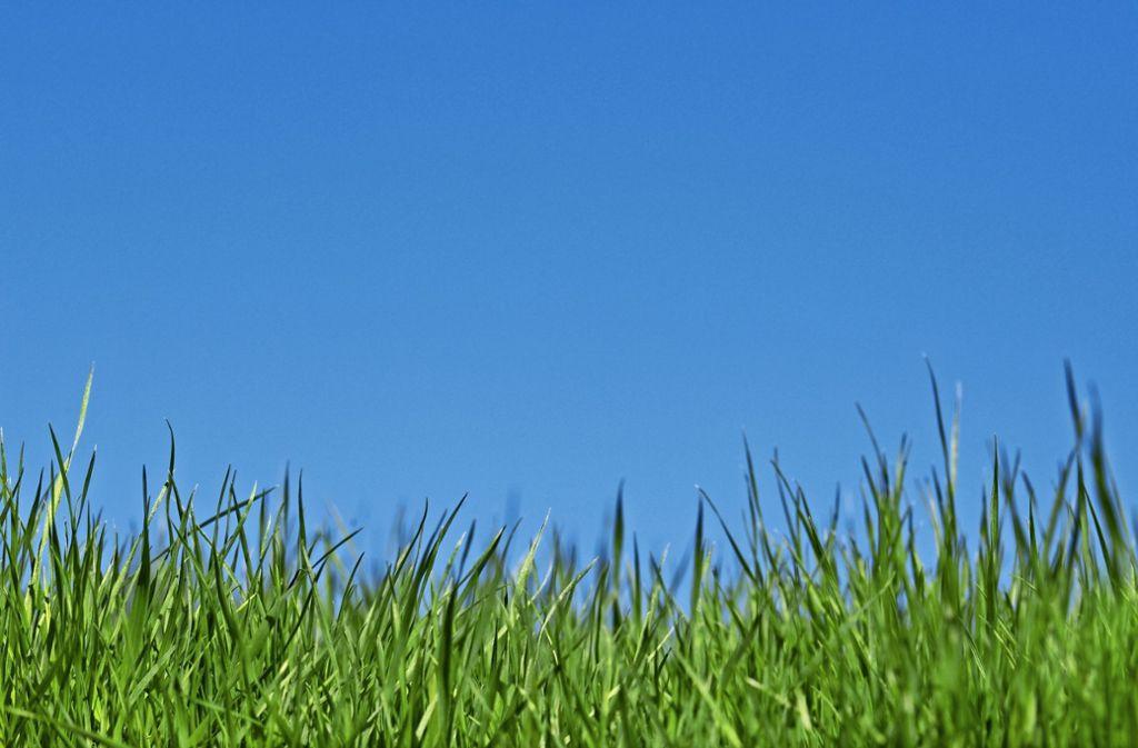 Gras ist nicht gleich Gras. Und sattes Grün ist eine Wissenschaft für sich. In Sillenbuch wohnen Zwei, die sich damit bestens auskennen. Foto: Mauritius