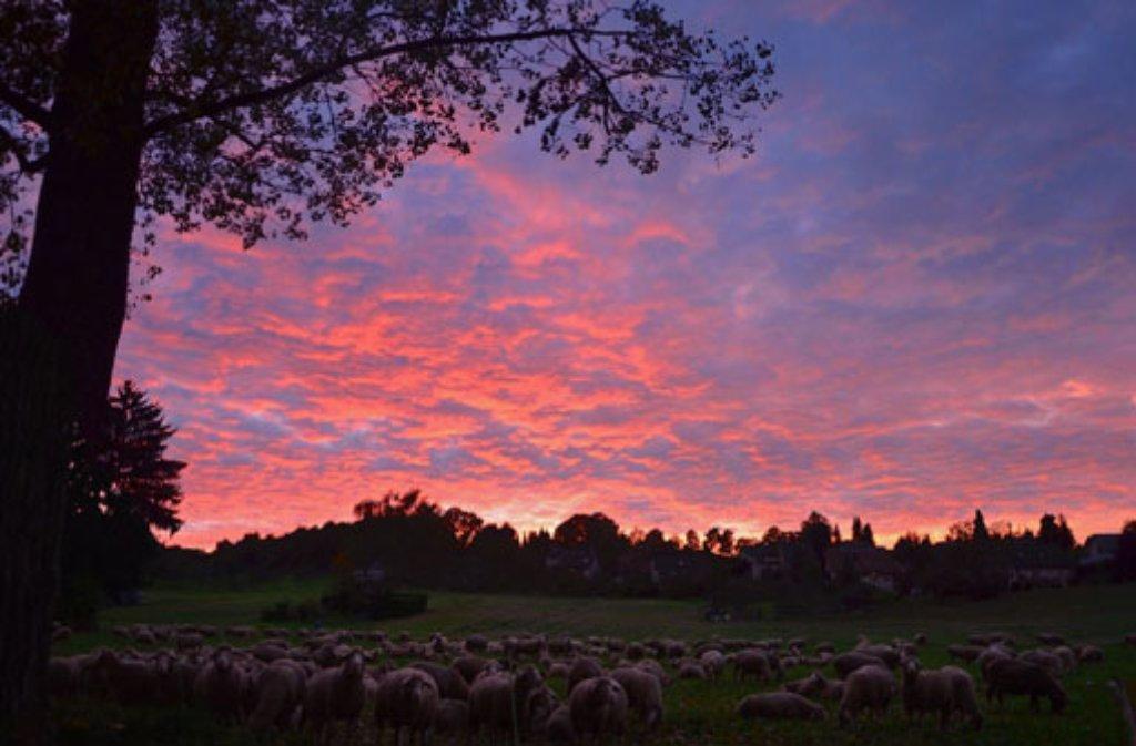 Magische Momente am herbstlichen Himmel: Sonnenuntergangs-Spektakel bei Filderstadt. Foto: Leserfotograf toller-ede