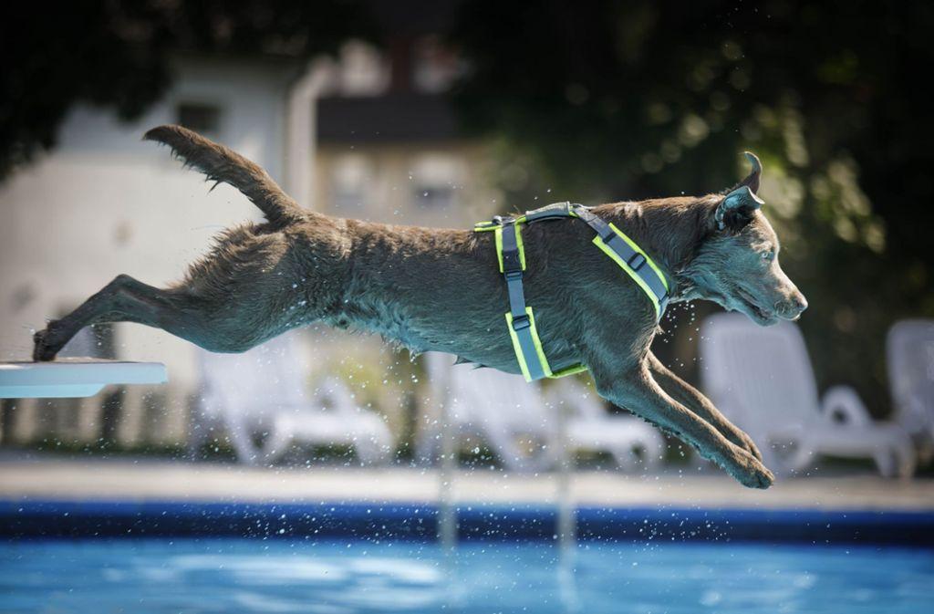 Auch Hunde gehen gerne mal ins Freibad. Foto: Gottfried Stoppel/Archiv