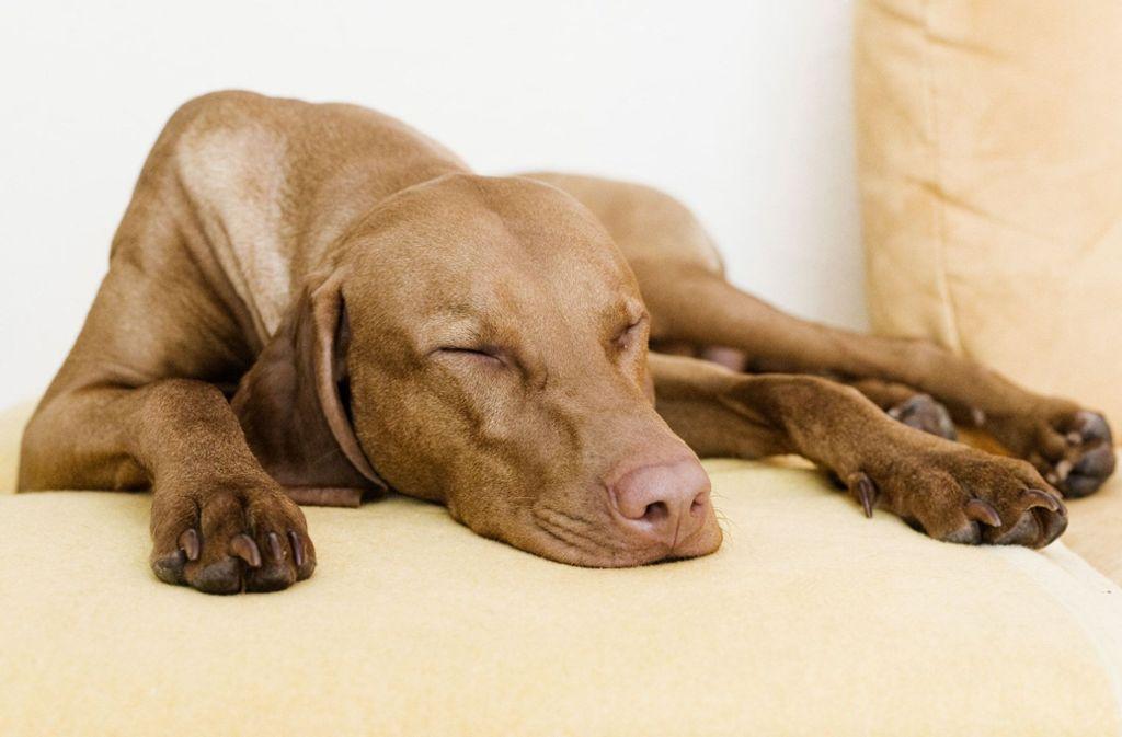 Wenn das geliebte Haustier stirbt (Symbolbild), ist der Verlust für die Menschen oft nur schwer zu verarbeiten. Foto: dpa