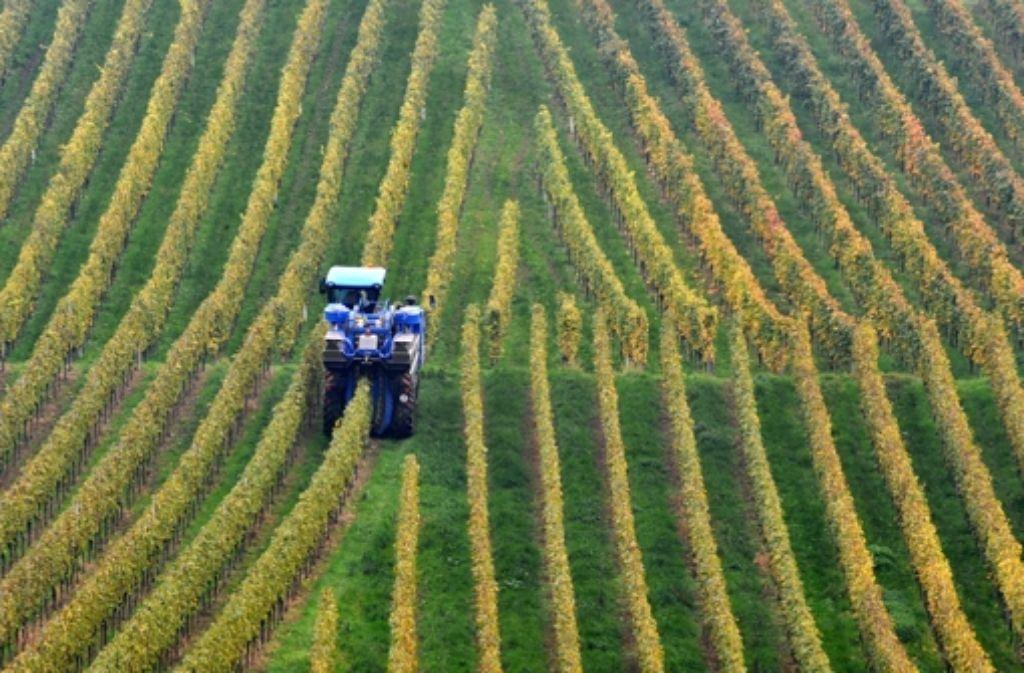 Weinhang bei Heilbronn. Hier kommt unser Wein der Woche her. Foto: dpa