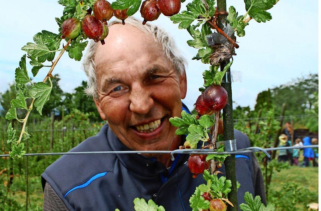 Heinz Munder muss die Stachelbeeren früher als gewohnt ernten. Foto: