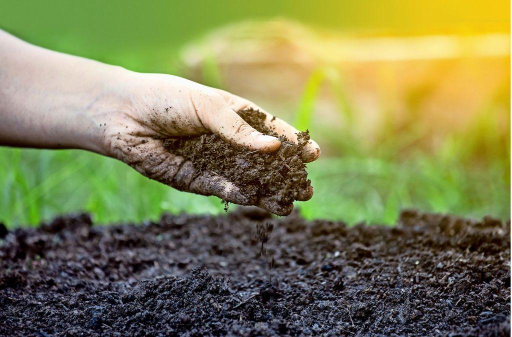 Wer erfolgreich gärtnern will, muss auch die Bodenqualität im Auge behalten. Foto: pingpao - stock.adobe.com