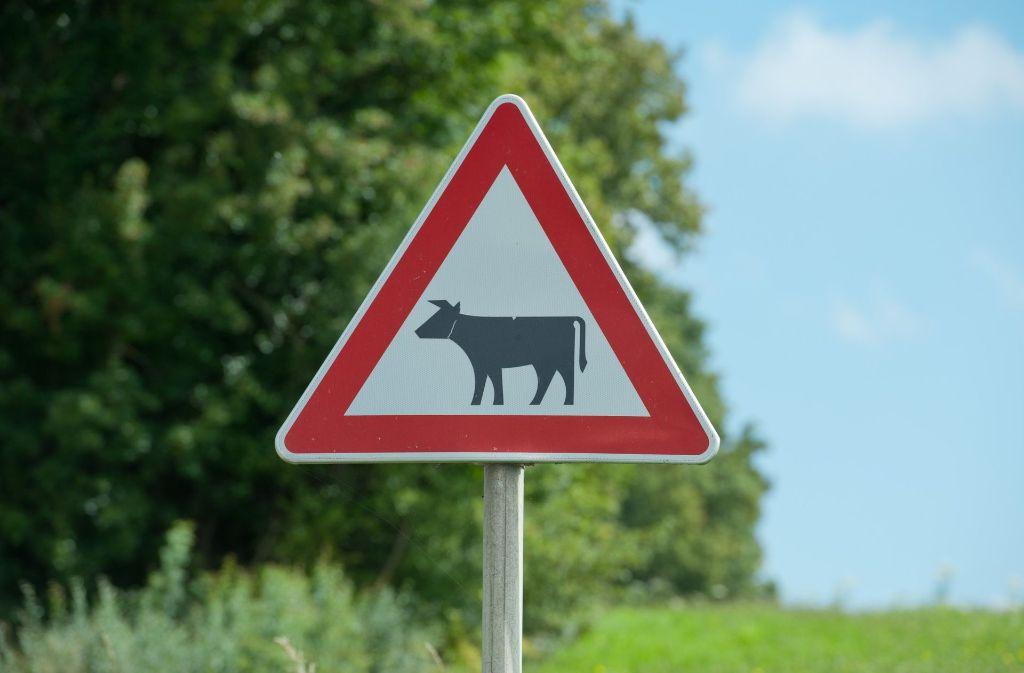 Auch Kühen machen der Wintereinbruch und rutschige Straßen zu schaffen. Foto: dpa