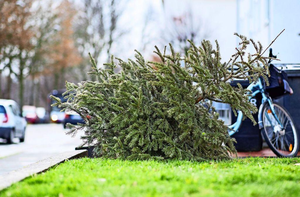Dienst getan: Fleißige Helfer wollen Christbäume einsammeln. Foto: dpa/Marcel Kusch
