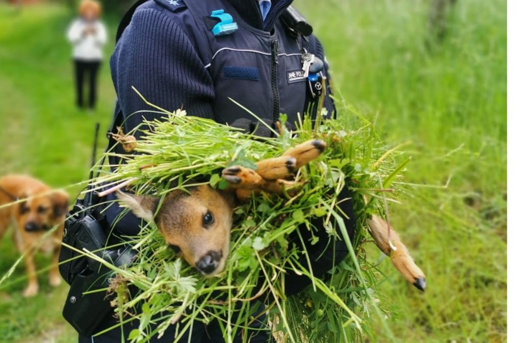 Wildtierbabys dürfen nicht von Menschen berührt werden. Foto: Polizei Ludwigsburg