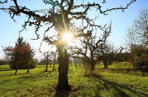 Nur das Obst  markierter Bäume schmeckt