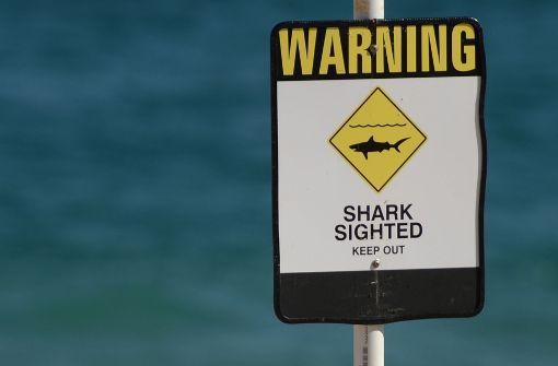 Schlag den Hai