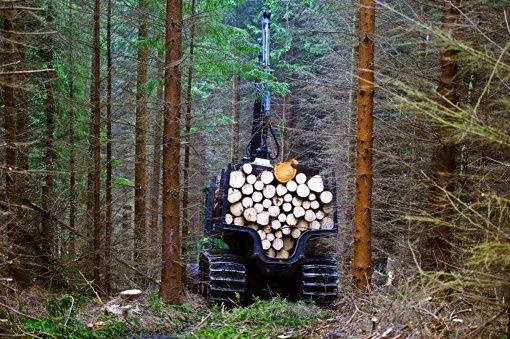 """""""Holzverkauf ist keine hoheitliche Aufgabe"""""""