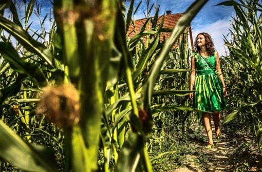 Bauerngolf am Maislabyrinth