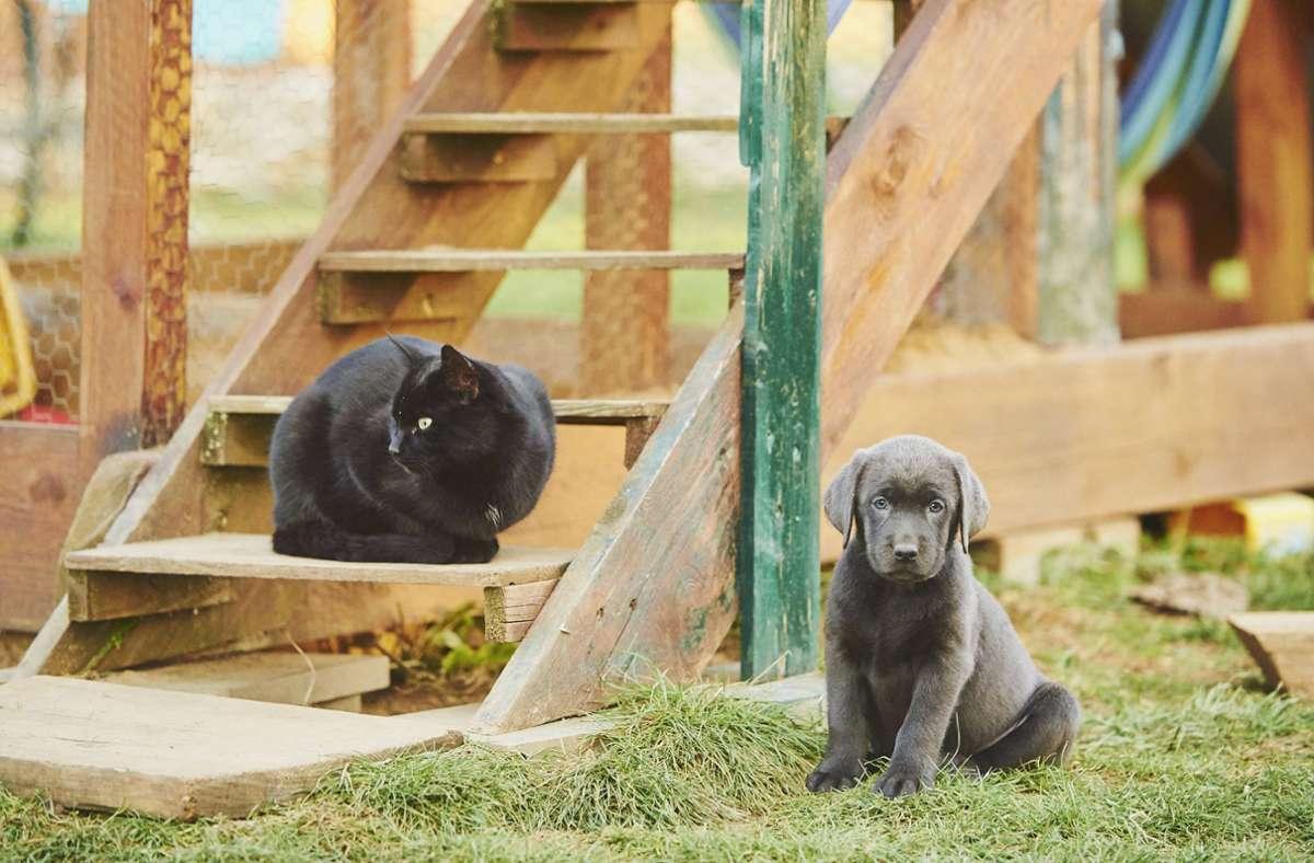 Katzen und Hunde können das Virus von ihren Besitzern bekommen. Foto: imago images/blickwinkel/D. u. M. Sheldon via www.imago-images.de