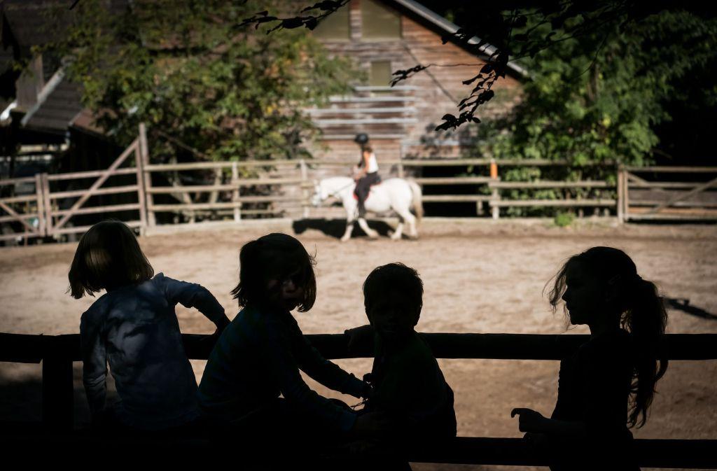 Die Jugendfarm Elsental wird bei Kindern und Jugendlichen immer beliebter. Foto: Lichtgut/Achim Zweygarth