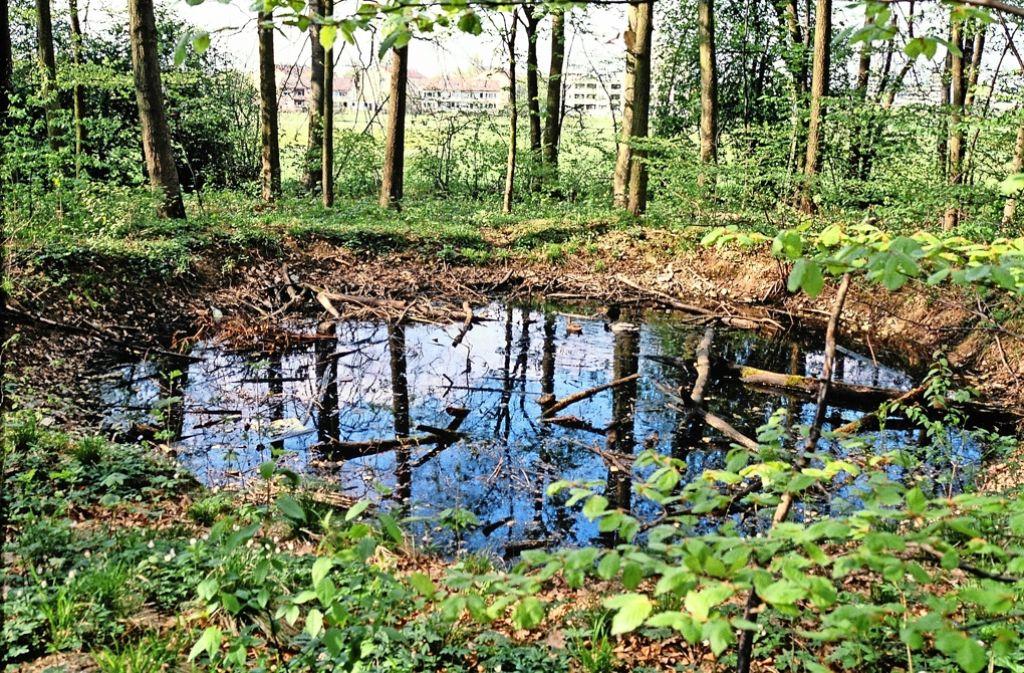 Heute ein Biotop –   Bombentrichter im Dürrlewang-Wald Foto: Wörner
