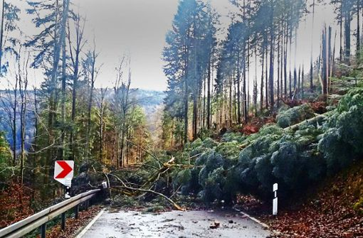 Forstämter: Waldspaziergang  ist gefährlich