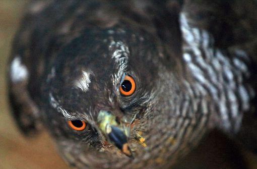 Polizei  befreit Vogel  aus Kühlergrill
