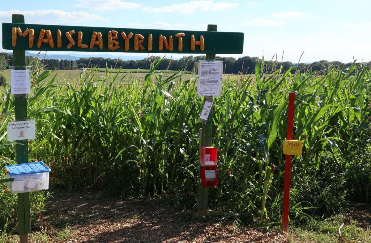 Das Maislabyrinth sieht jedes Jahr anders aus. Foto: Gemeinde Alfdorf