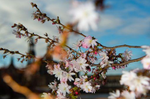 Das Wochenende bringt warme Frühlingstemperaturen
