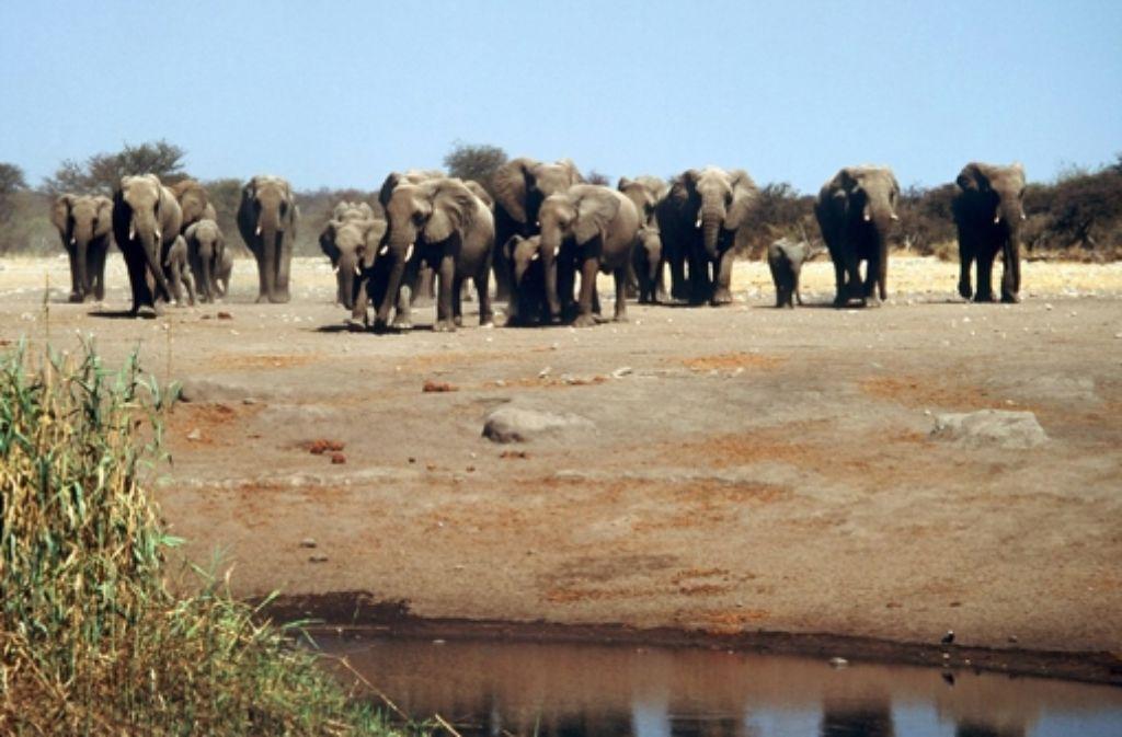 Ist die Sorge um die Dürrekatastrophen in Namibia bald Vergangenheit? Foto: dpa