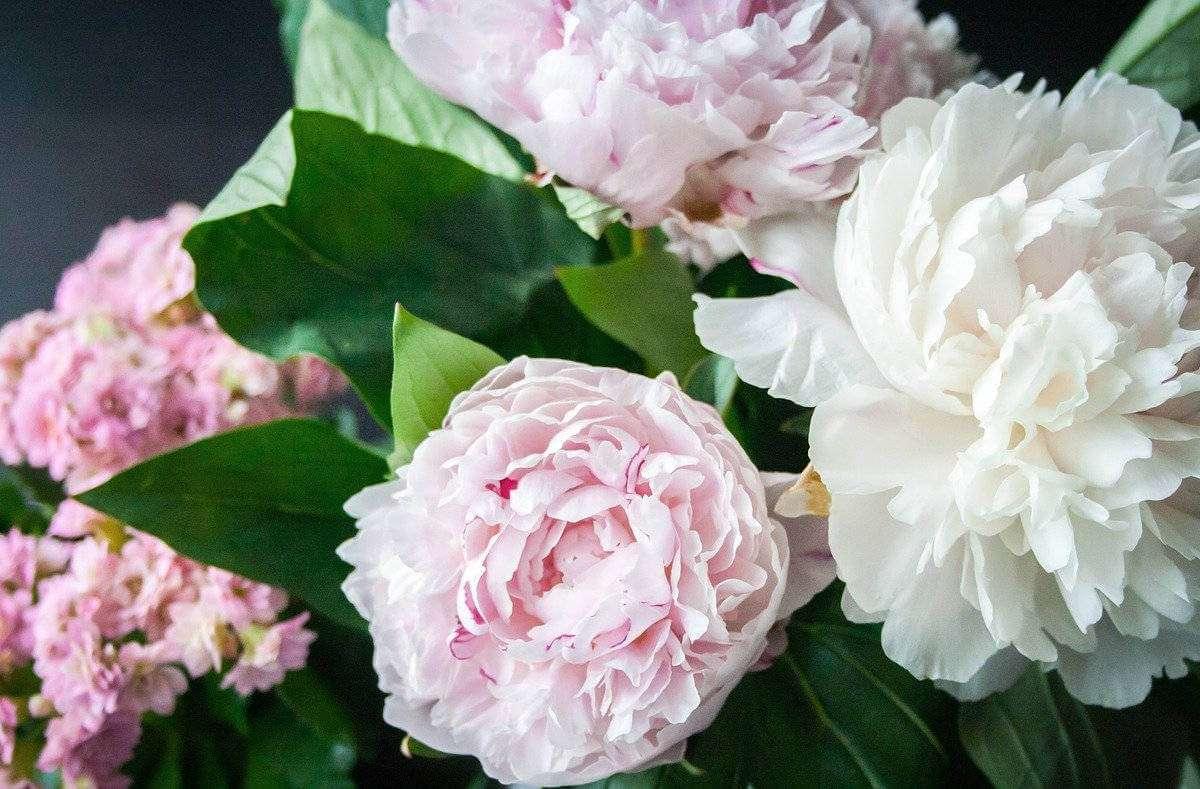 Mit Flower-Power in den Frühling! Die Hochzeitssaison ist eingeläutet, Muttertag steht vor der Tür, die Wohnung will floral aufgehübscht werden. Wir verraten euch, wo es in Stuttgart die schönsten Blumen gibt. Foto: Nile / pixabay.com