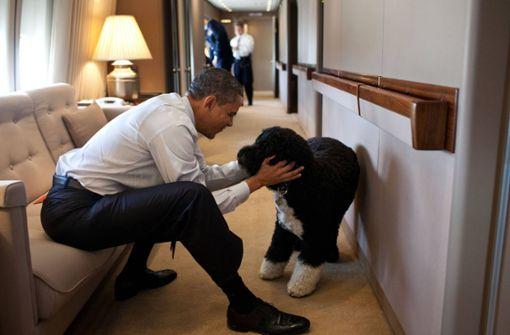 First Dogs – das waren die Hunde der US-Präsidenten
