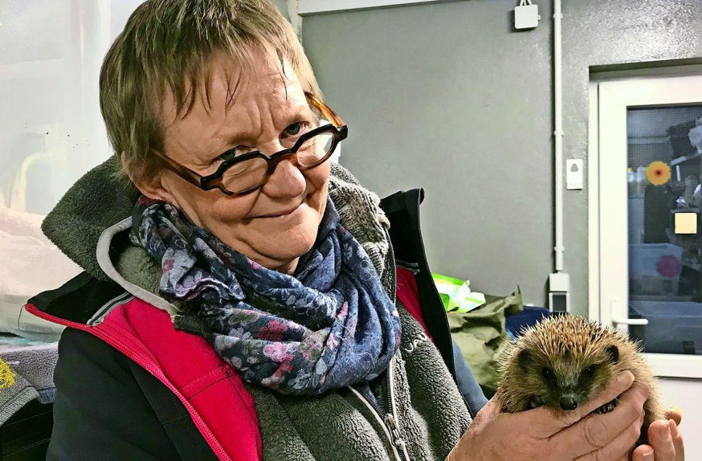 Antje Päglow hat ein großes Herz für Igel. Hier hält sie den kleinen Graye in den Händen.  Dessen Bruder päppelt sie daheim auf. Foto: Pehar