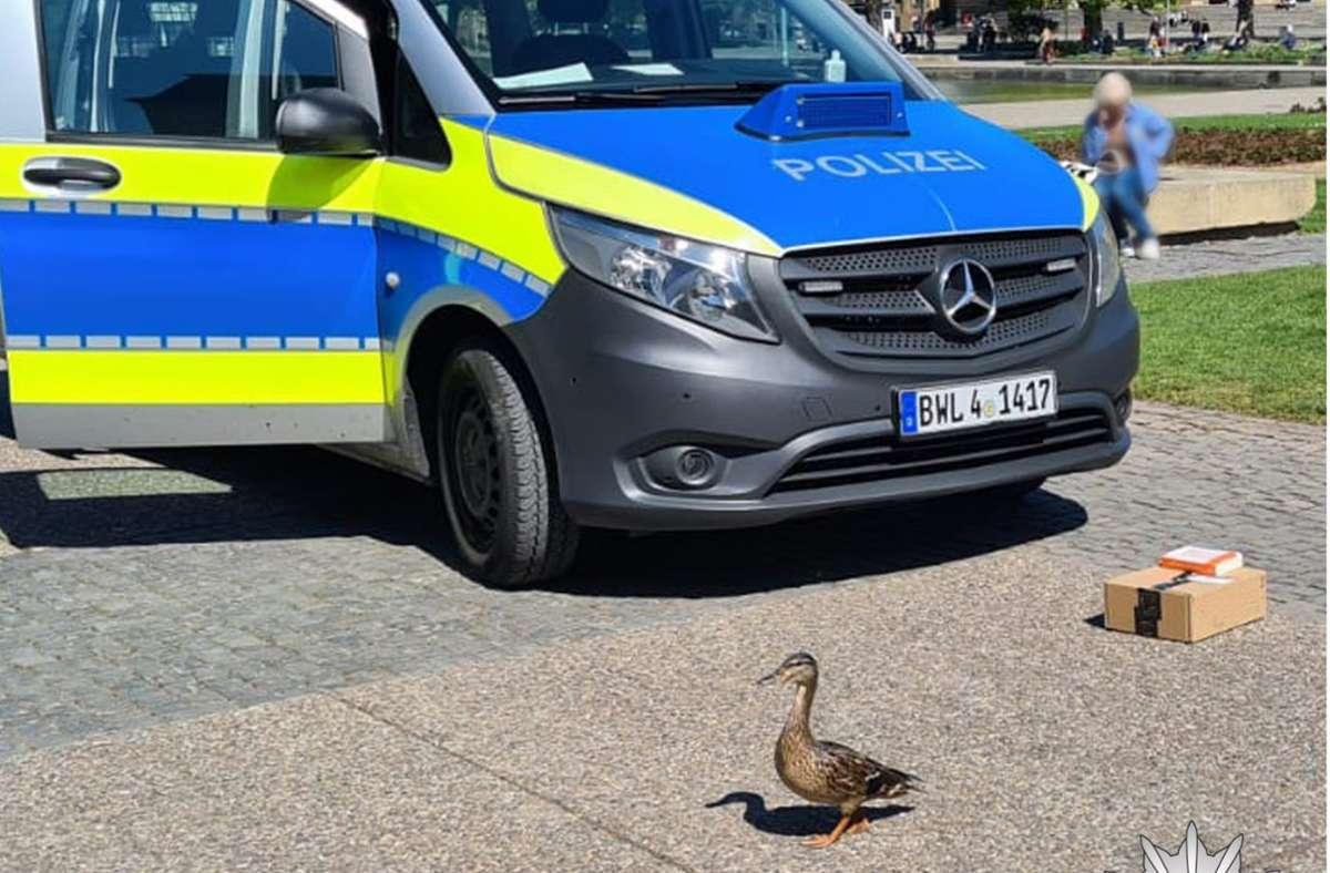 Die Entenmutter wurde am Eckensee angegriffen. Foto: Facebook Polizei Stuttgart