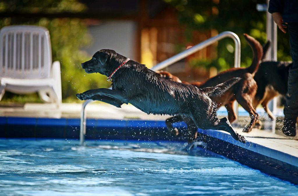 Mit einem beherzten Sprung oder doch lieber über die Treppe ins Schwimmbecken? Die Geschmäcker sind auch bei Hunden verschieden. Foto: Gottfried Stoppel