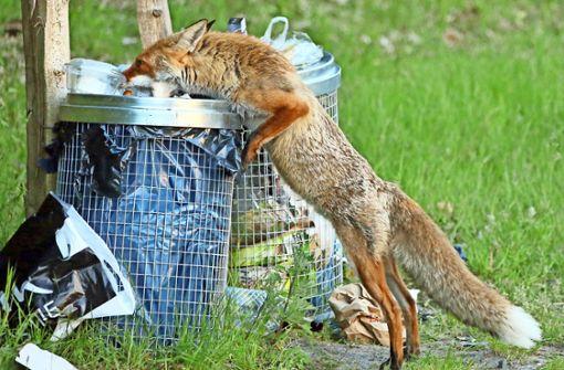 Arzt rät: Haustiere rechtzeitig impfen