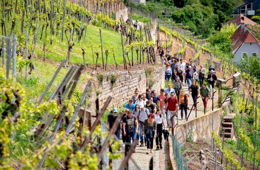 Wandernde Weingenießer