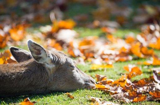 Tier und Mensch genießen die Herbstsonne