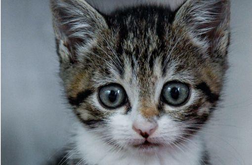 Drei Katzenbabys vor Schrottpresse gerettet