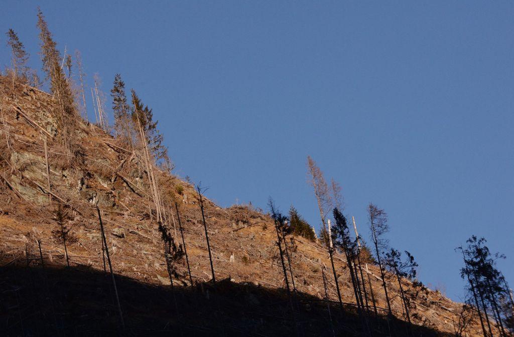 Einst weltbekannt: Die Wälder der Karpaten sind nur noch ein Schatten ihrer selbst. Foto: AFP/Daniel Mihailescu