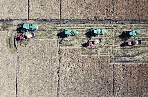 Weltweite Kluft zwischen Hunger und Übersättigung wird immer größer