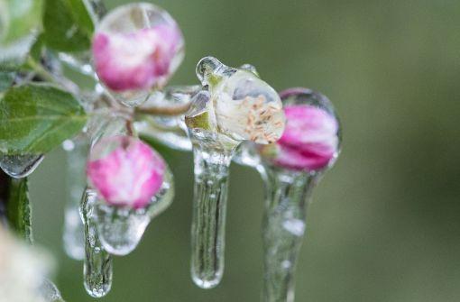 Land stuft Frost als Naturkatastrophe ein