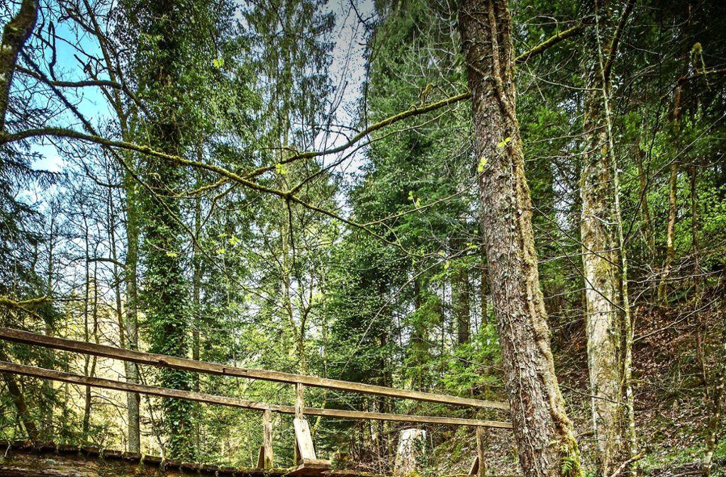 Der Naturpark Schwäbisch-Fränkischer-Wald feiert Geburtstag Foto: Stoppel/Archiv