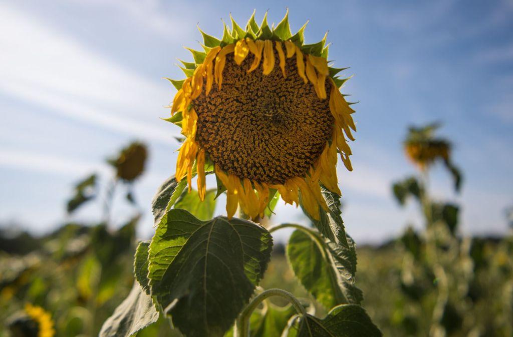 Der heiße und trockene Sommer hat vielen zu denken gegeben. Foto: dpa