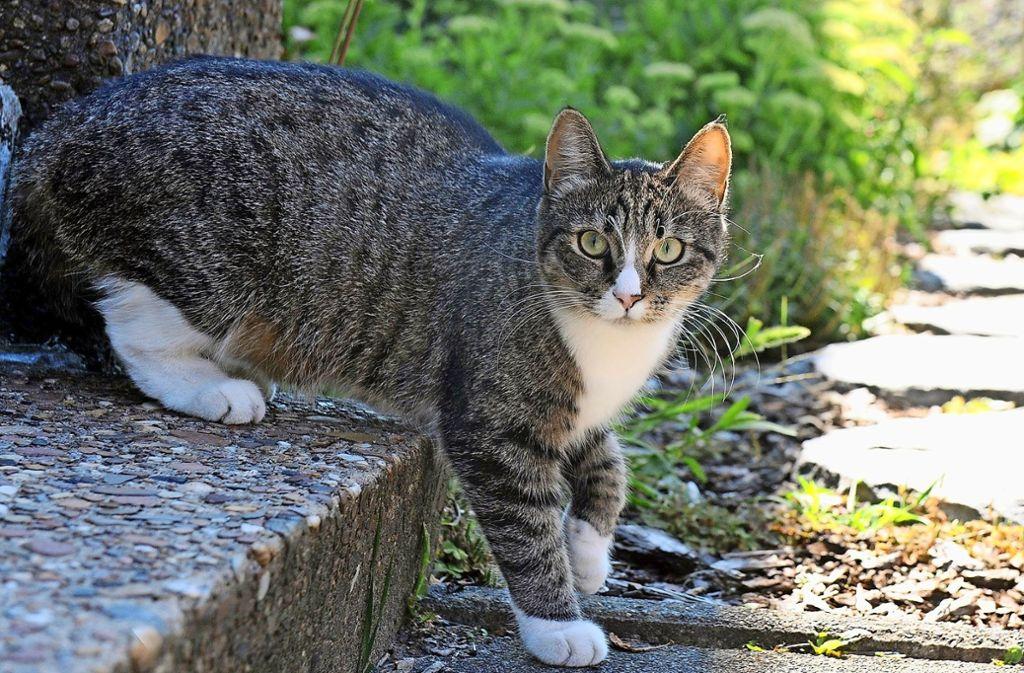 Die Mitglieder der Katzenhilfe kümmern sich um Streuner, ausgesetzte und ungewollte Samtpfoten. Foto: dpa