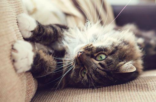 Erfahren Sie die 6 Gründe, warum Katzen kratzen und wie Sie das Kratzen Ihrer Hauskatze abgewöhnen.