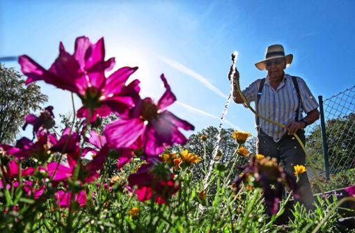 Wie groß ist die Chance auf einen Garten?