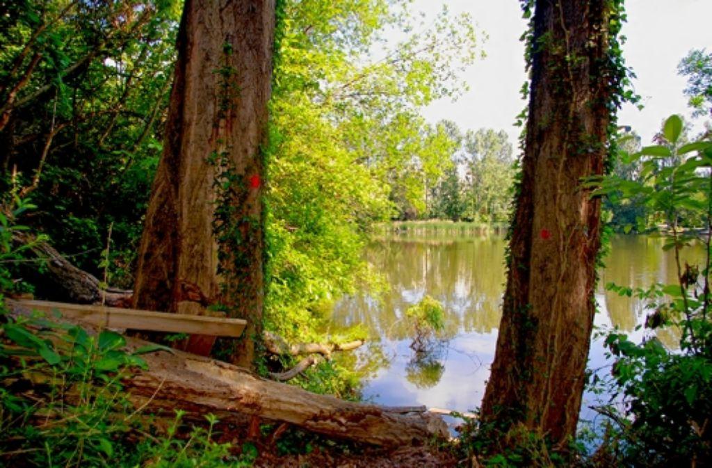 Am Ufer des Probstsees liegen zahlreiche gefällte Bäume. Foto: Alexandra Kratz