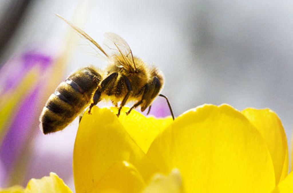 Vier Jahre, nachdem die Bienen verschwunden sind, soll die Welt untergehen. Foto: dpa