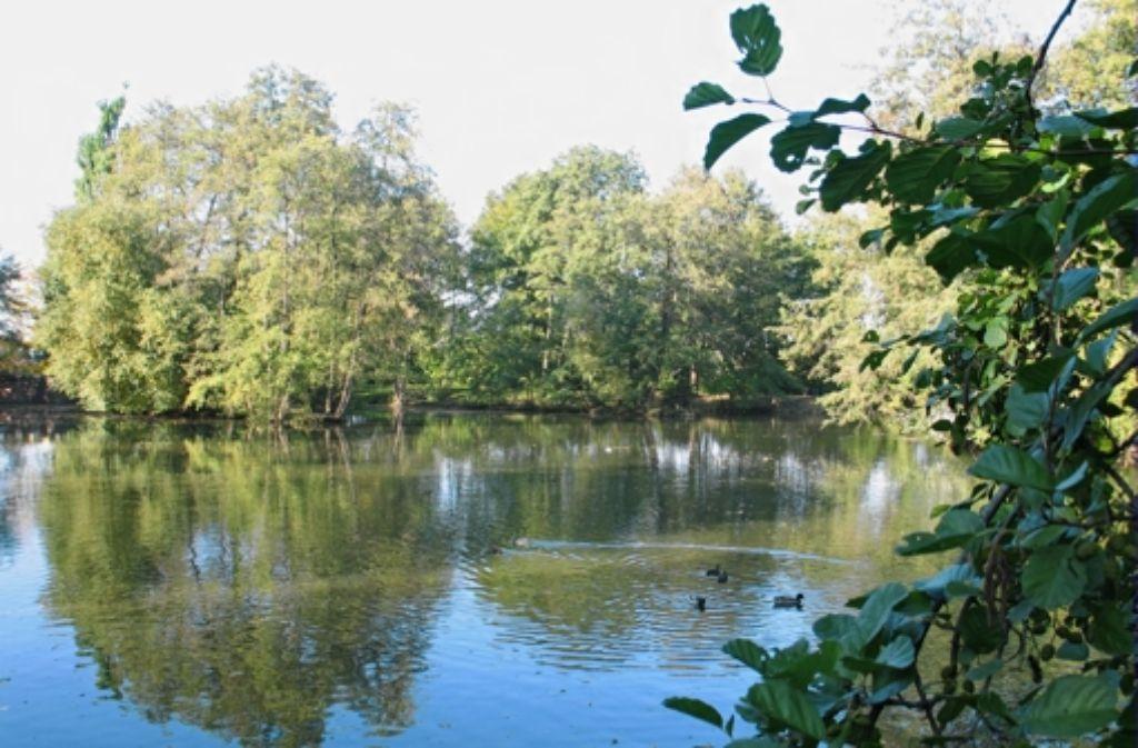 Fischrettung per Feuerwehr war im Riedsee in Möhringen gefragt. Foto: