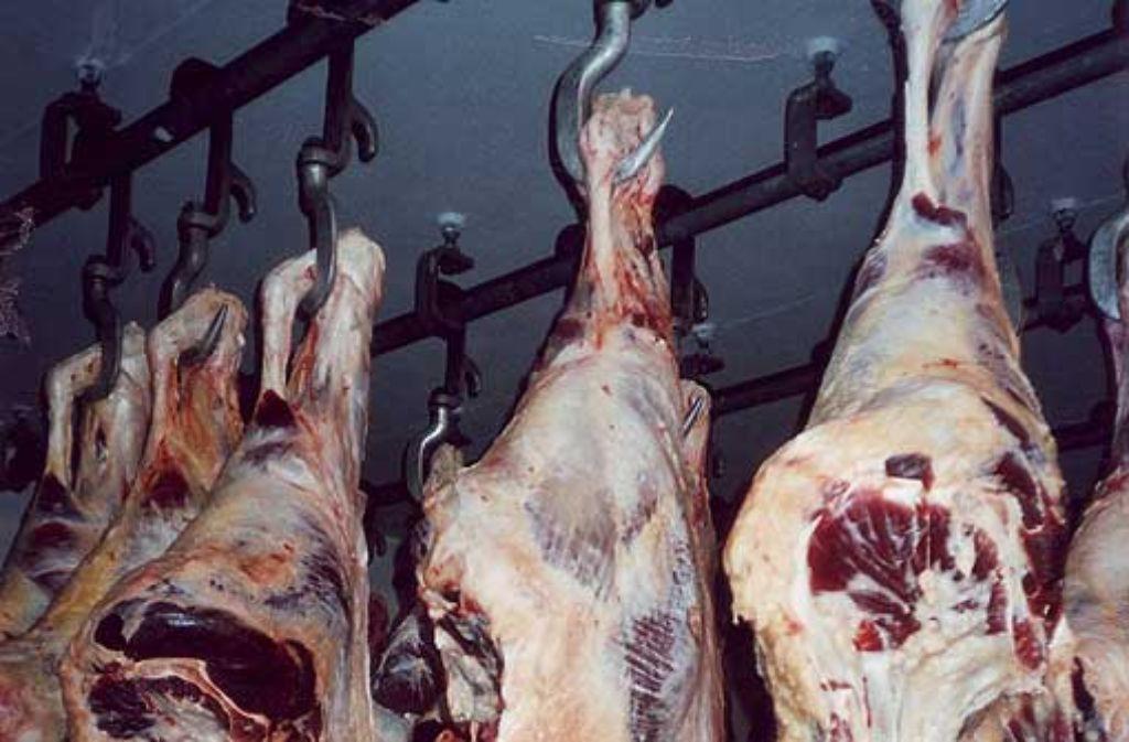 Diese geschlachteten Tiere sind offenbar illegal verschnitten worden. Foto: Loeckx