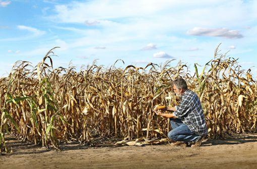 Hungersnöte durch Klimawandel?