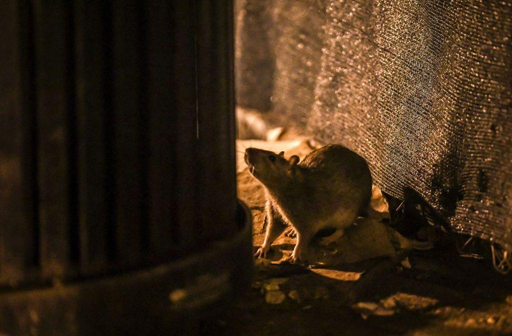 Toiletten am Amtsgericht sind gesperrt, weil Anfang Juni eine Ratte aus einer Kloschüssel lugte. Nun wird das Rohrsystem des Gebäudes untersucht. Foto: dpa