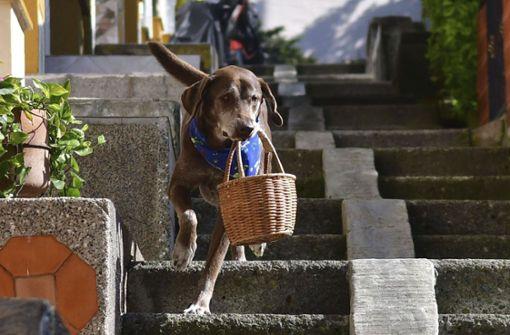 Hund Eros liefert Lebensmittel aus