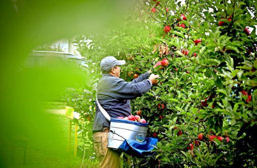Bei Obstbauern herrscht miese Stimmung wegen Klimakritik