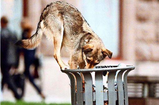 Frei laufender Hund verunsichert Nachbarn