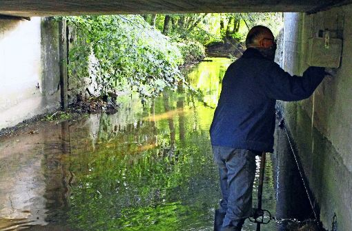 Wasseramseln fühlen sich in  Eltingen richtig wohl